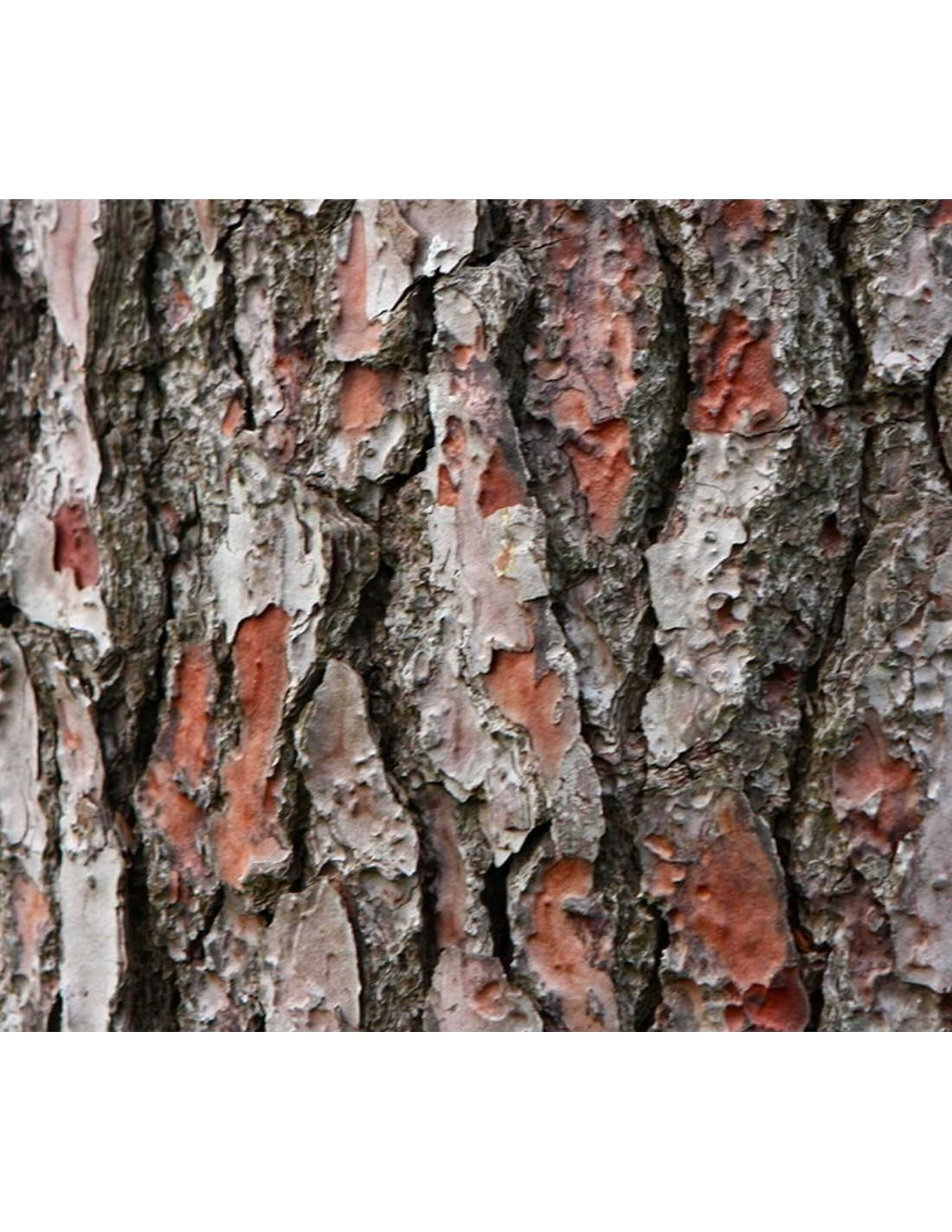 Vitacort sustrato de corteza de pino mar timo - Corteza de pino ...