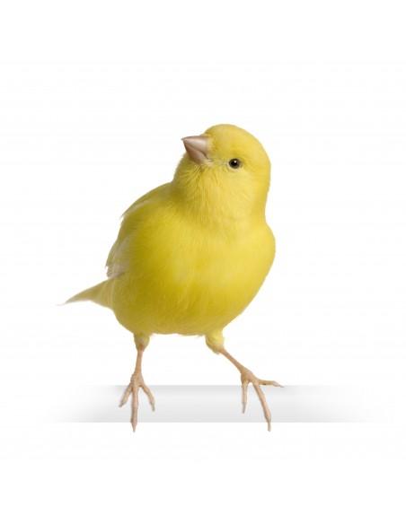Promociones para Aves