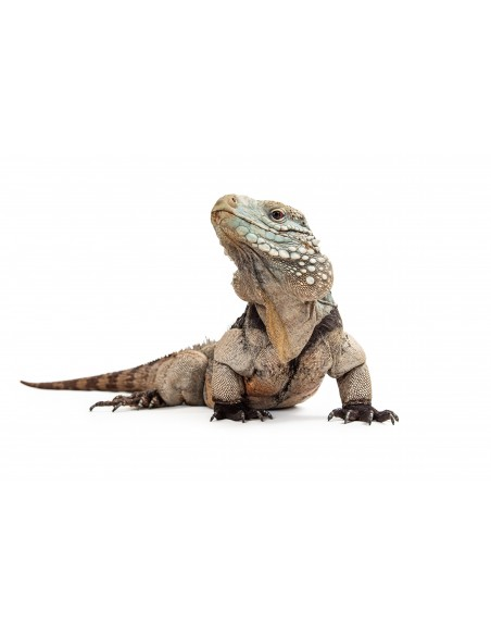 Promociones para Reptiles