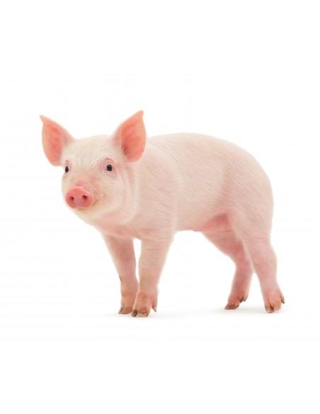 Promociones para Porcicultura